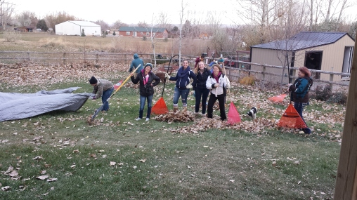 Student ambassadors helping rake leaves for a family in Riverton.